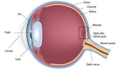 eye disease macular degeneration
